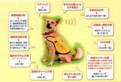 assistant_dog.jpg