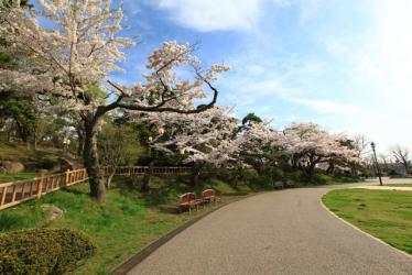 サクラ函館公園 074
