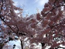 サクラ函館公園 189-2