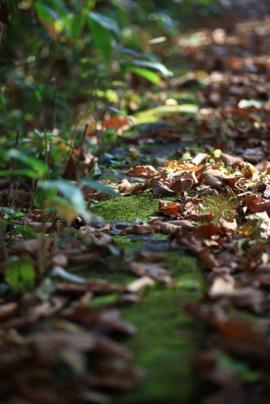 大沼の秋1 043a