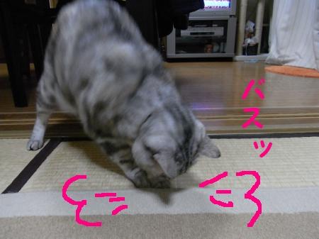 20090223/3