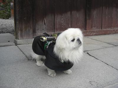 samuraidogg.jpg