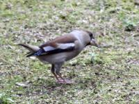 bird-00