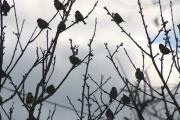 bird-suzume