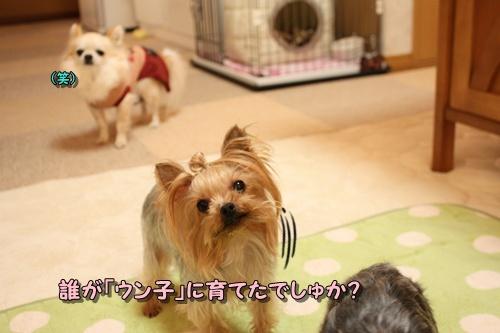 しゃんぷー6