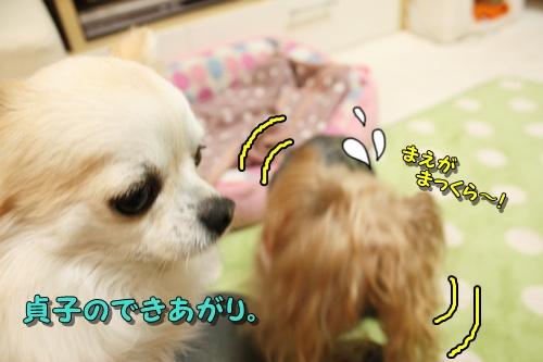 しゃんぷー1