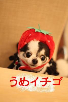 うめイチゴ