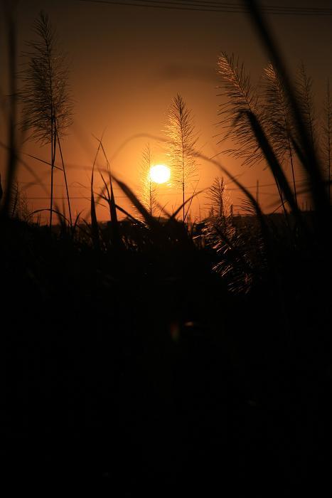 夕日とキビ穂
