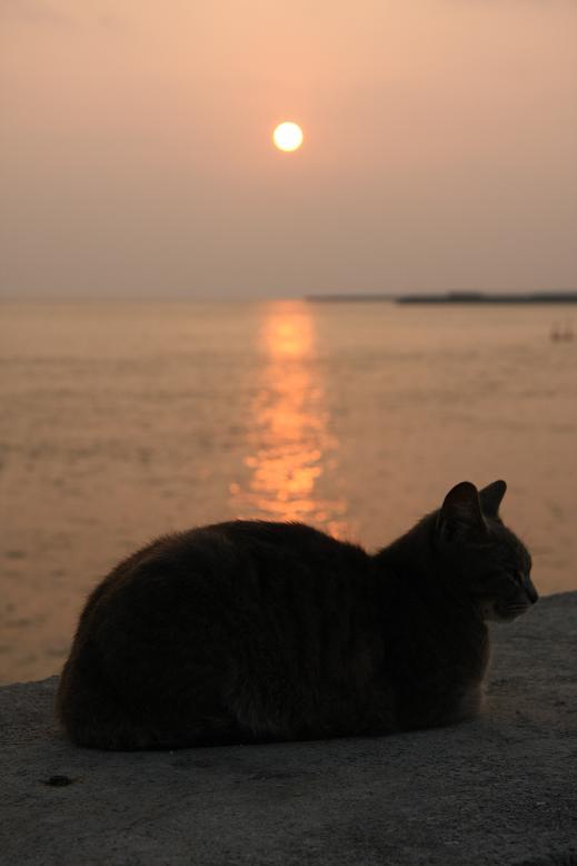 夕暮れと猫