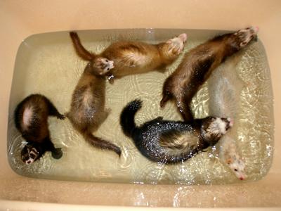 6名様、シャワーをお待ちです~♪