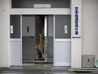akiyamagoh08.jpg