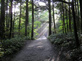 forest001.jpg