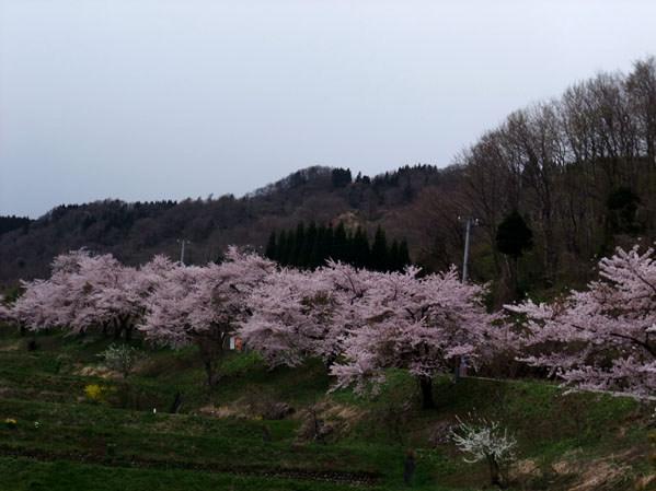 yamasaku4.jpg