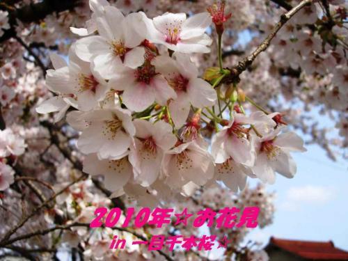 2010☆お花見
