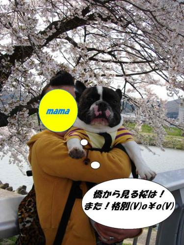 2010☆お花見②