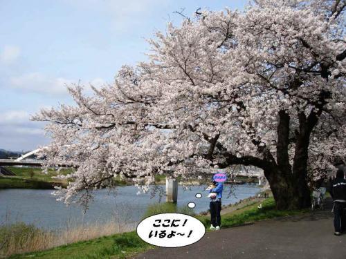 2010☆お花見4④