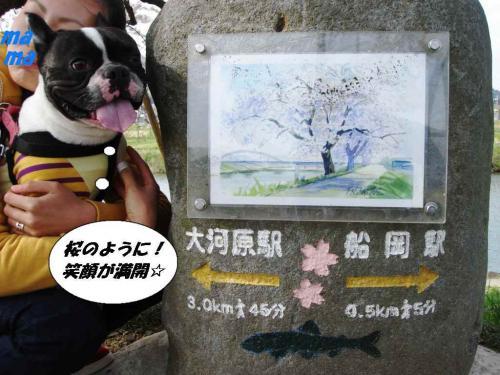 2010★お花見⑤