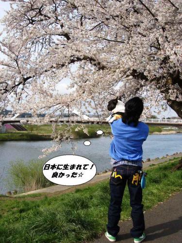2010★お花見⑦