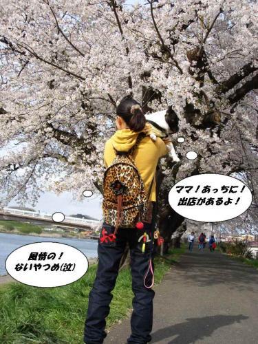 2010★お花見⑧