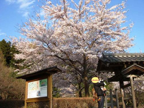 軽井沢★桜④