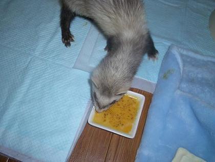 ジャスミンの食事0703