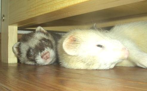 マイキーJR&ポン太JRの寝床