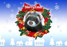 クリスマスカード(おむさん)_s