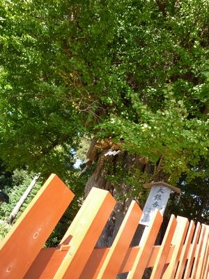 鶴岡八幡宮_20091115_08