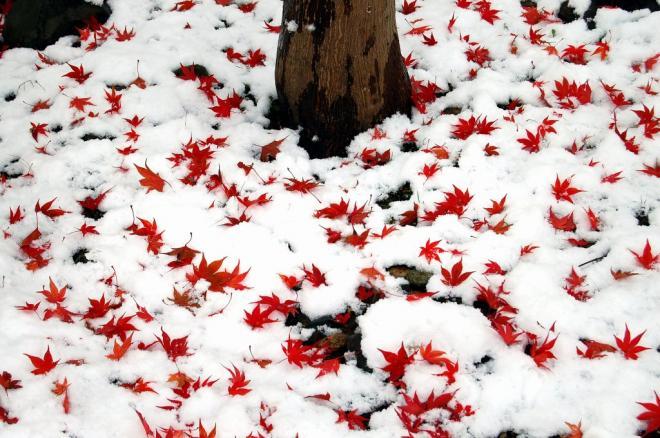 初雪2・1