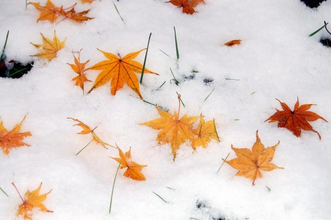 初雪2・2