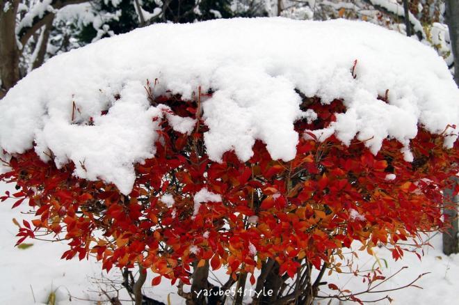初雪2・3