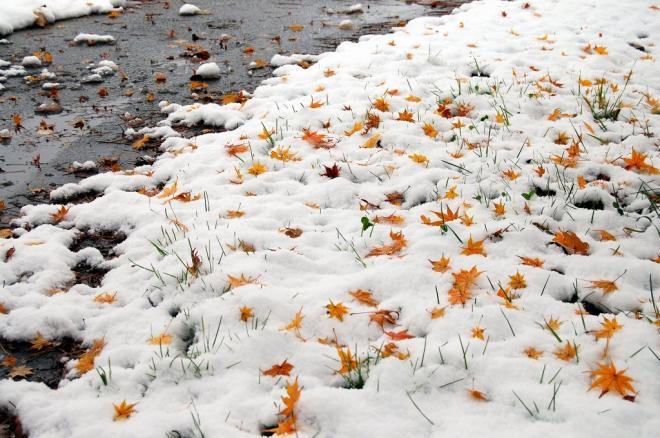 初雪2・4
