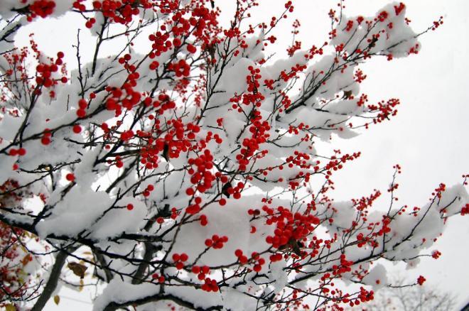 初雪2・5