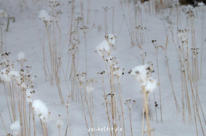 初雪2・6