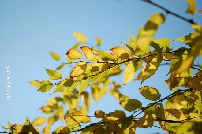 fall12.jpg
