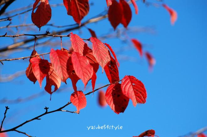 fall13.jpg