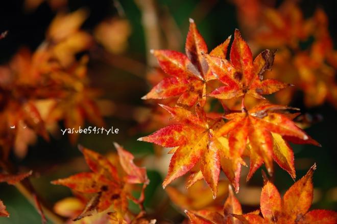 fall6.jpg