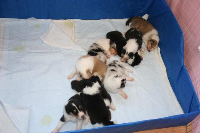マザーレイクの仔犬達、ヴィーキッズの縦列睡眠?