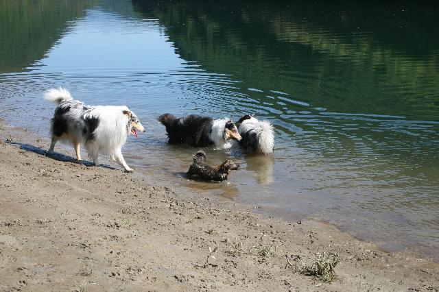 ウィンの初水遊びなんですが・・・?