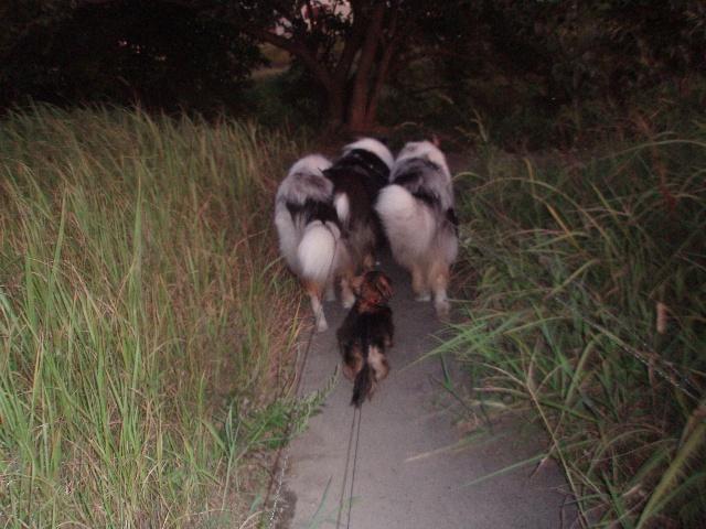 ある日のモノトーンズ(散歩1)
