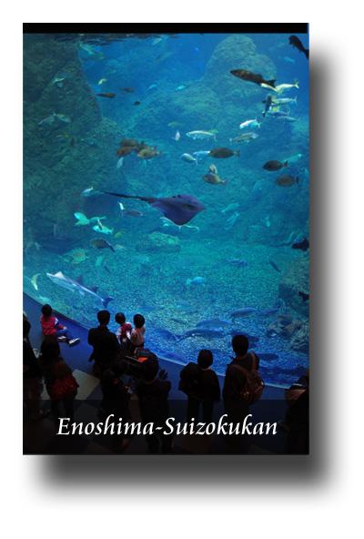 江ノ島水族館091103