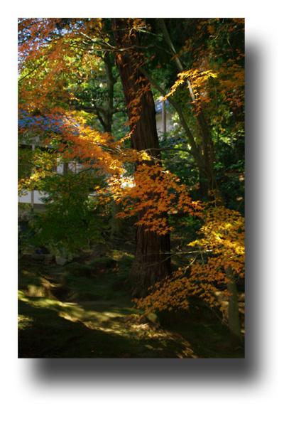 東福寺091109