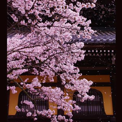 南禅寺100401