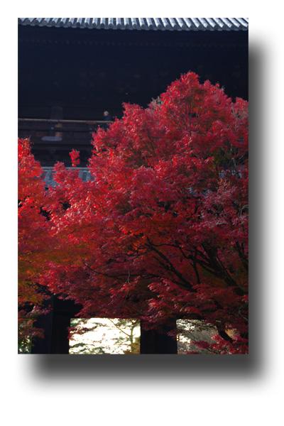 南禅寺101103_edited-1