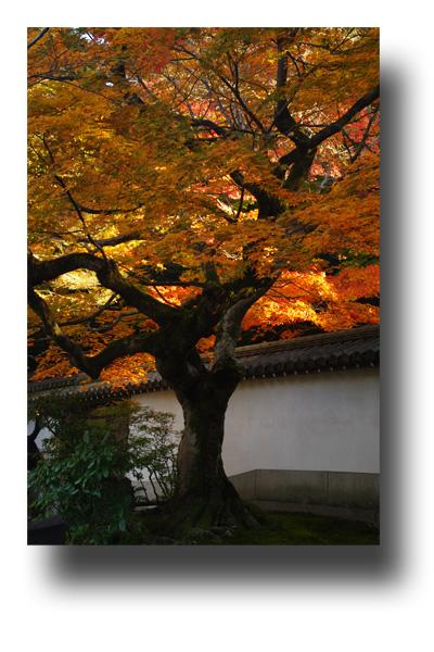 南禅寺101105_edited-1