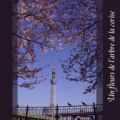 東京スカイツリー110401_edited-1