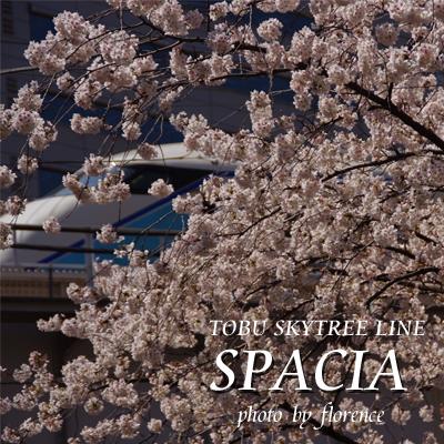 桜120301