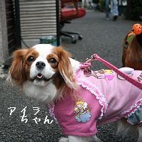 IMG_8526.jpg