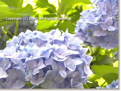 20110622_4.jpg