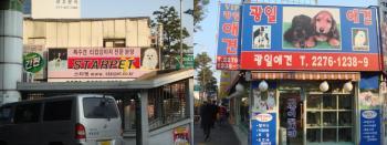 2008年12月韓国旅行001-6